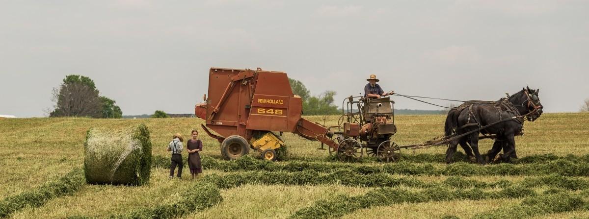 Organiczne rolnictwo się opłaca