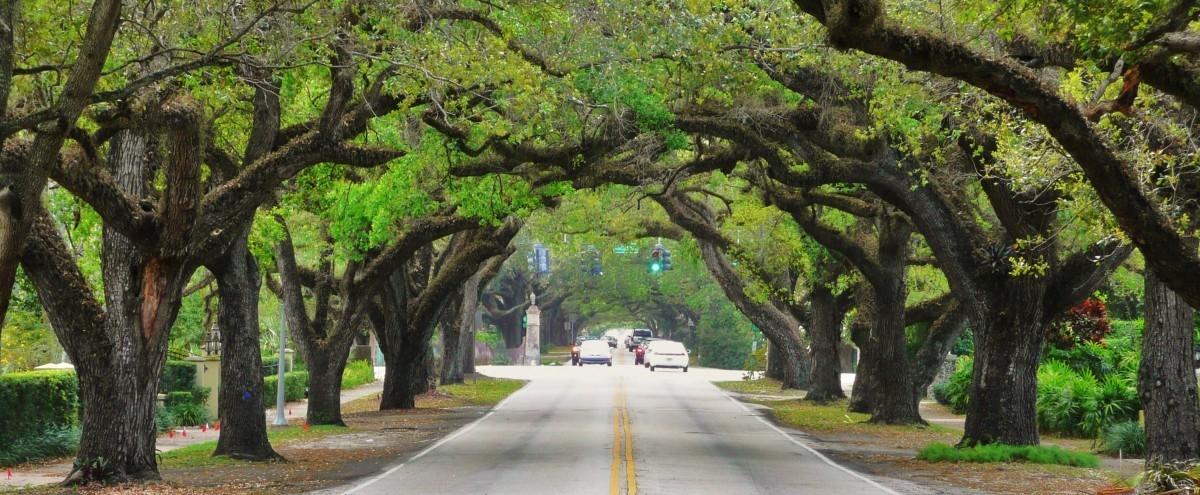 Sadźmy drzewa: tylko one potrafią wypocić miejski upał