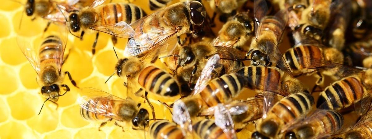 Pracować jak pszczoły. Taka przyszłość.
