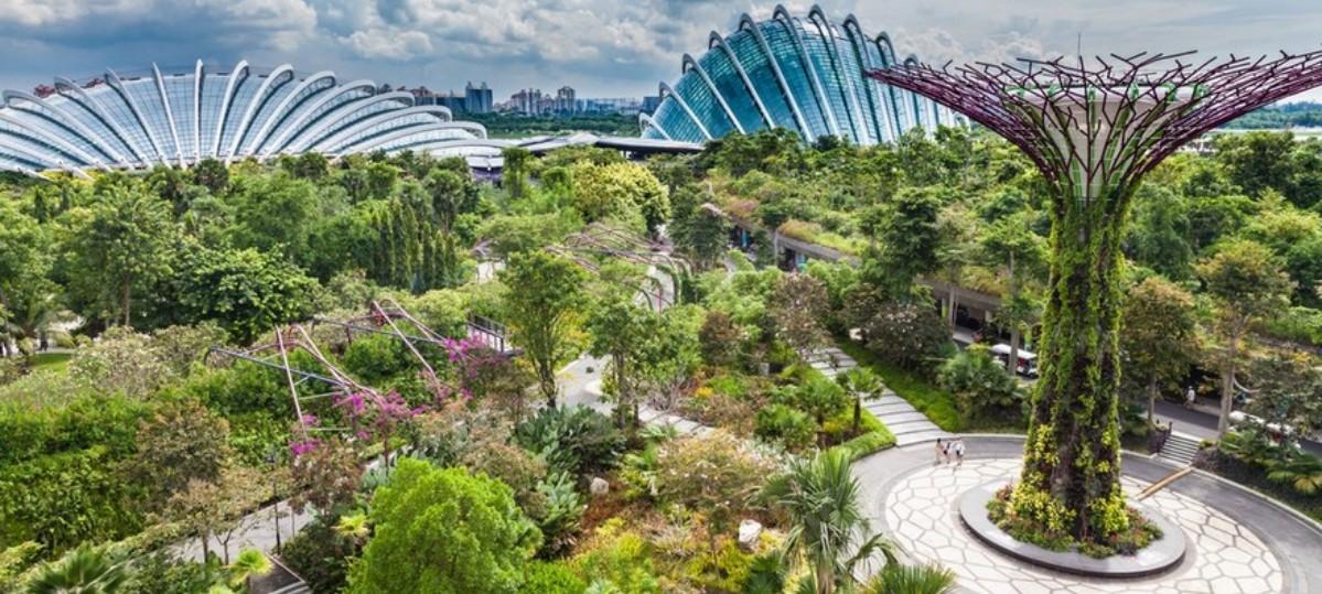 W Singapurze wyrosły super drzewa