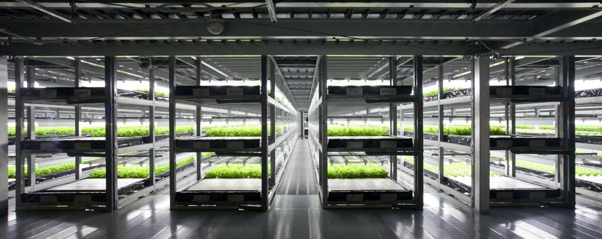 W Japonii powstanie wielka miejska farma prowadzona przez roboty