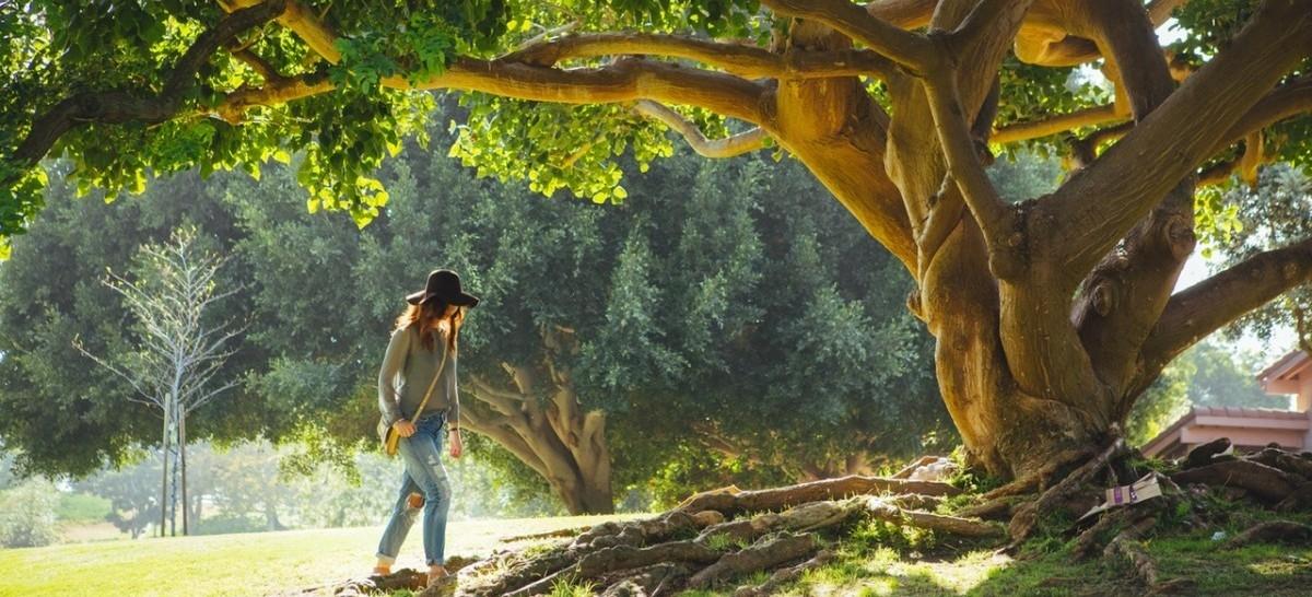 Milion dolarów zysków za każdy kilometr kwadratowy drzew w mieście