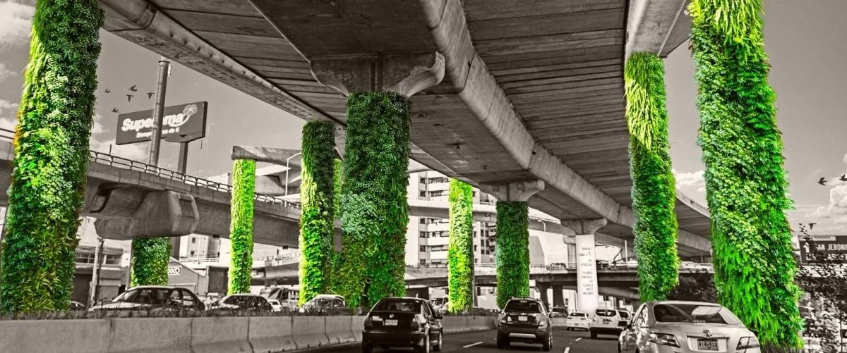 Tysiąc zielonych filarów