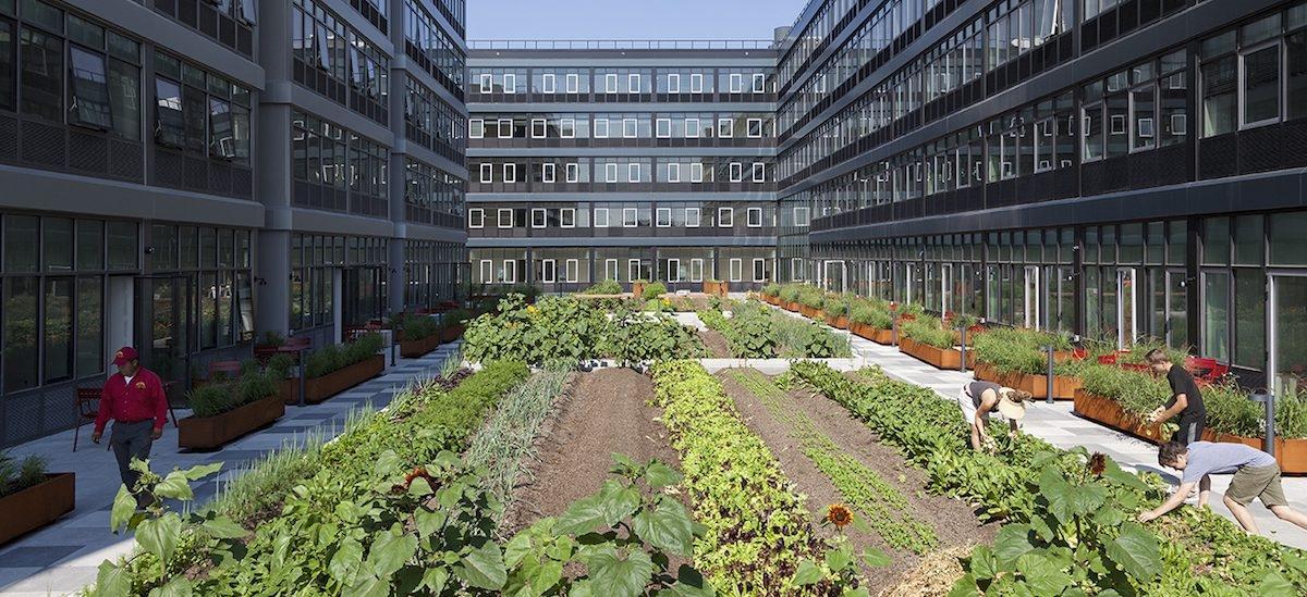 W Nowym Jorku w modzie są osiedla z miejskimi farmami