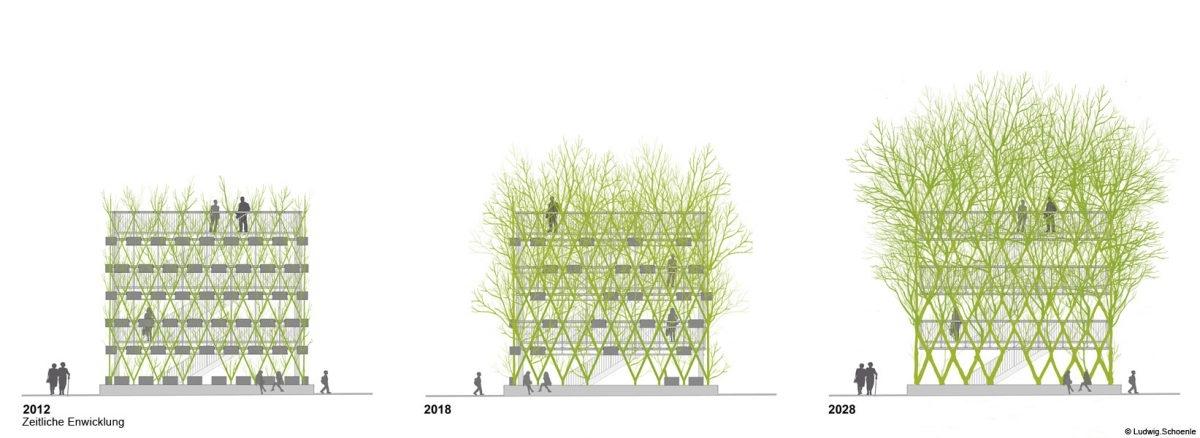 Pawilony budowane przez rosnące drzewa