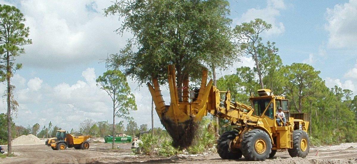Dzięki przesadzarkom drzew, miasto zazielenić można od ręki