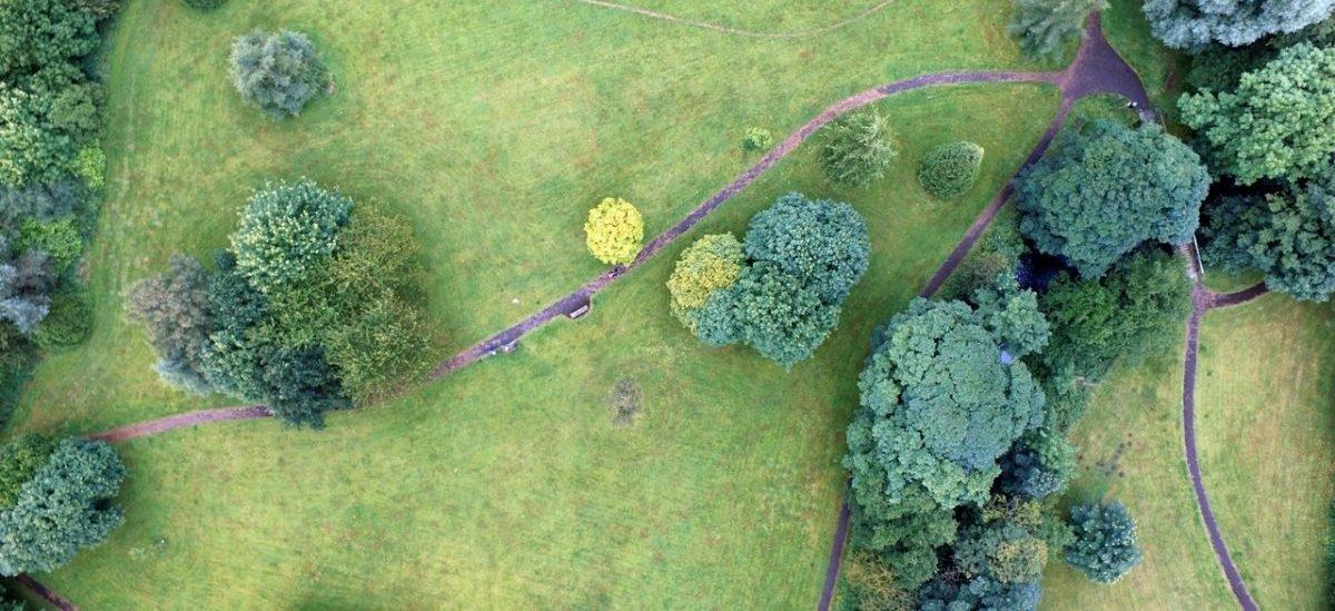 Wśród europejskich stolic na sadzeniu drzew najwięcej zyskają Madryt i Warszawa