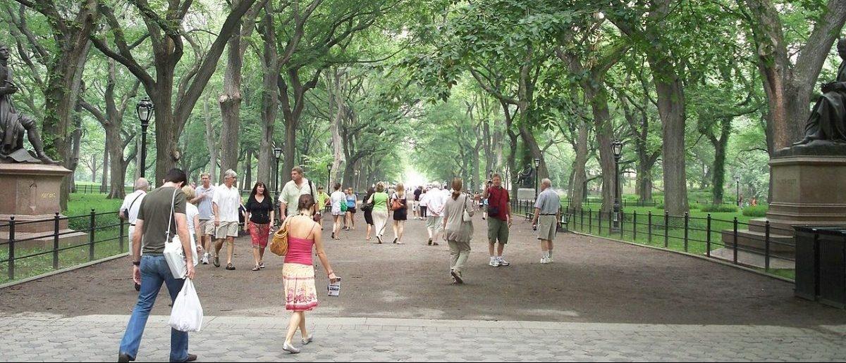 Parki powinny być duże i oferować zaplecze rekreacyjne dla wszystkich grup wiekowych
