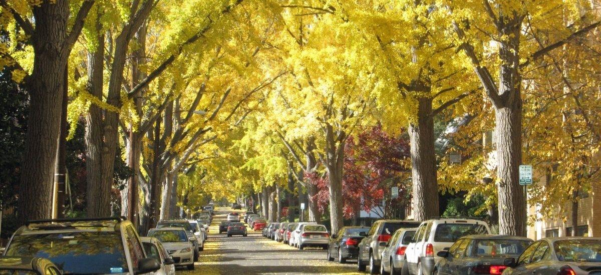 Drzewa dobre na wszystko, nawet na zmniejszanie przestępczości