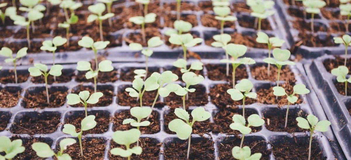 Ekologiczny prąd produkowany w skrzynkach z roślinami