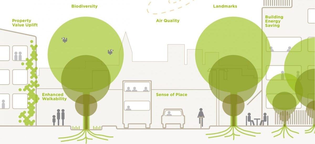 Przewodnik jak sadzić drzewa w mieście