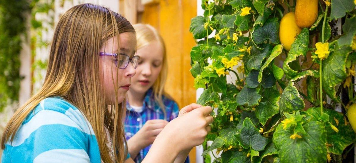 Letnie obozy dla młodych miejskich ogrodników