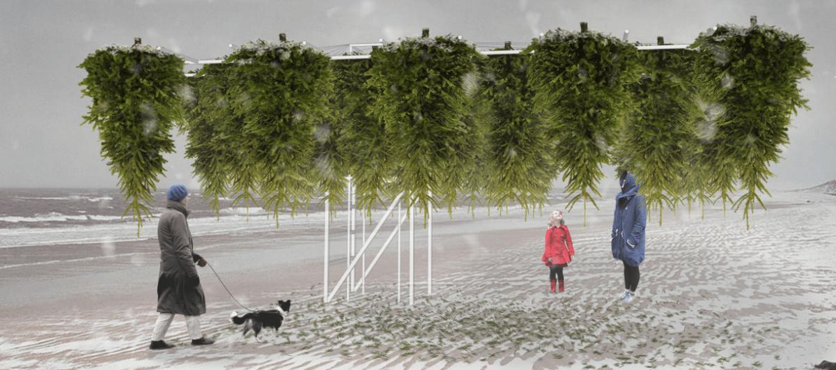 Odwrócony do góry nogami las i inne atrakcje, które zimą mają przyciągnąć ludzi na plażę