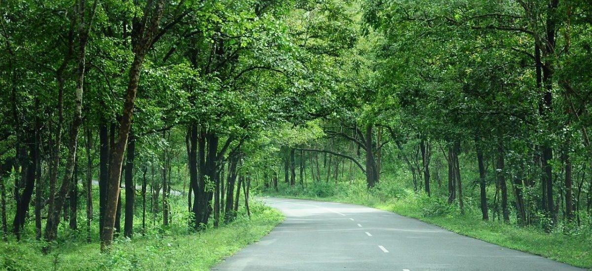 Na sadzenie drzew Hindusi wydadzą ponad 6 mld dolarów