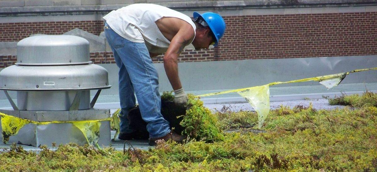 Zazielenianie dachów zmniejsza upał nawet o 7 – 8 stopni Celsiusza