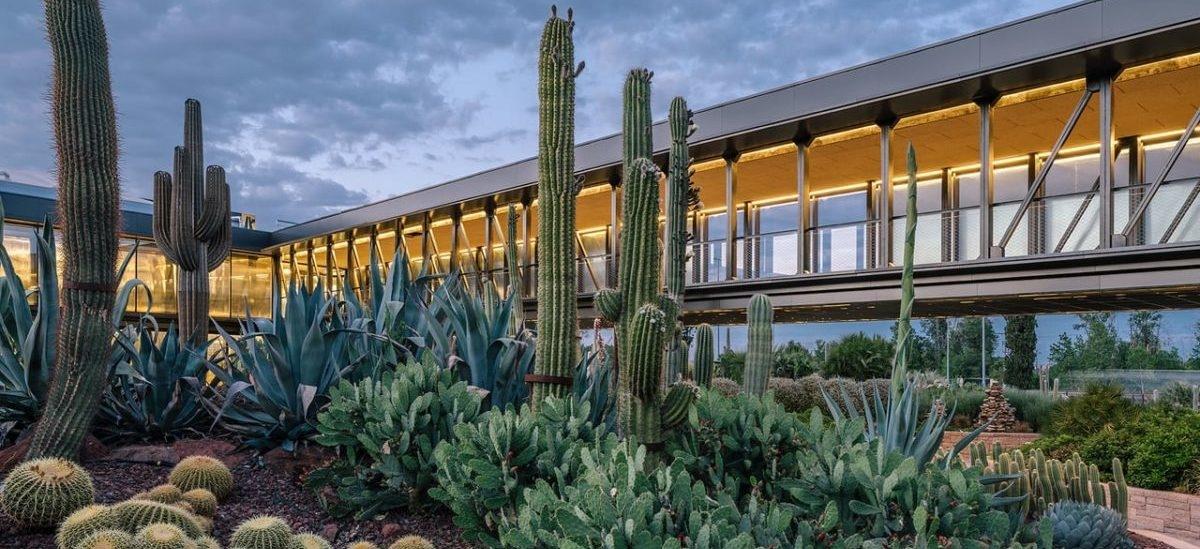Największa farma kaktusów w starej fabryce