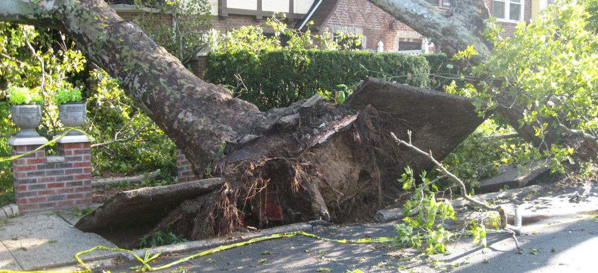Drzewa z fundamentami opierają się letnim nawałnicom w mieście