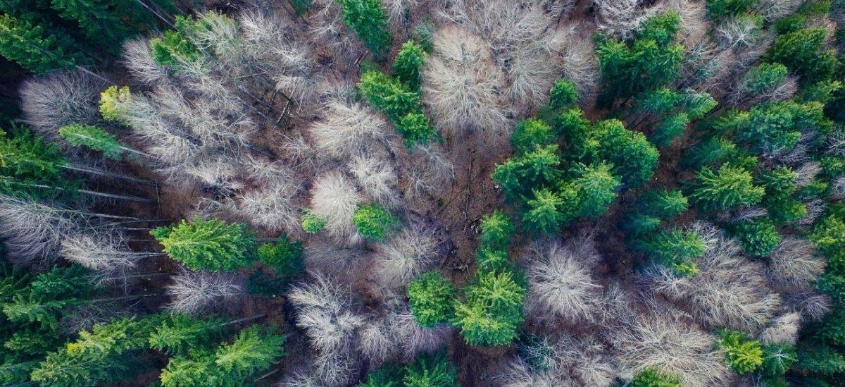 Jest plan wysiania biliona drzew