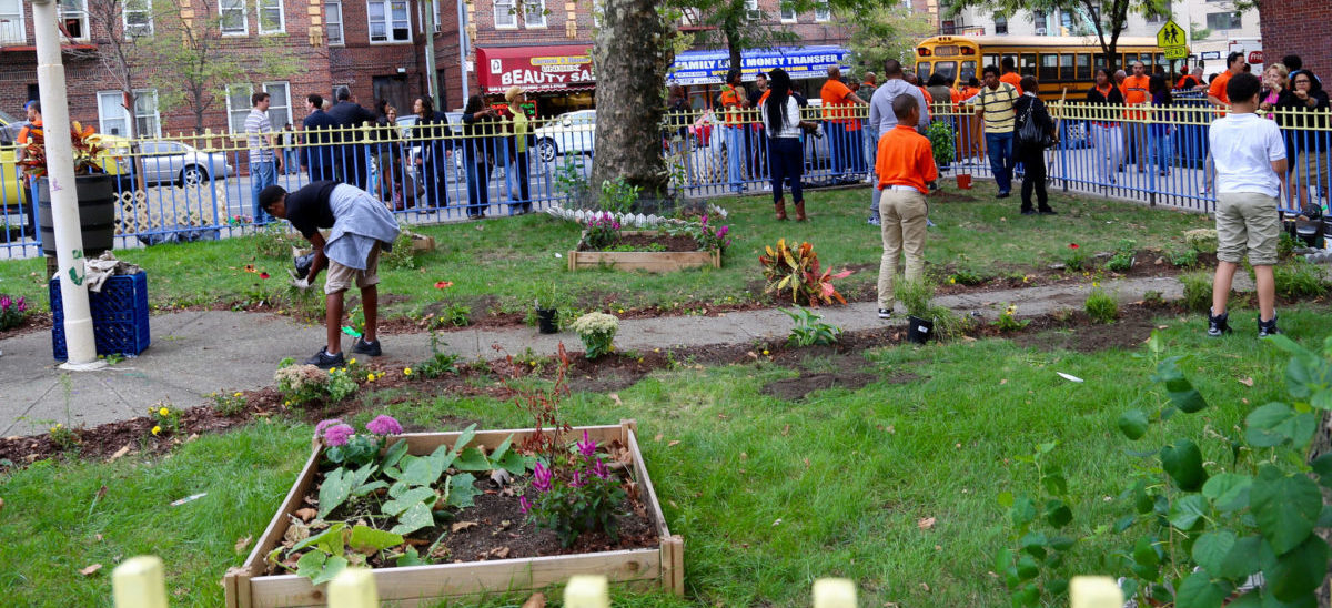 W Nowym Jorku mają już 500 szkolnych farm