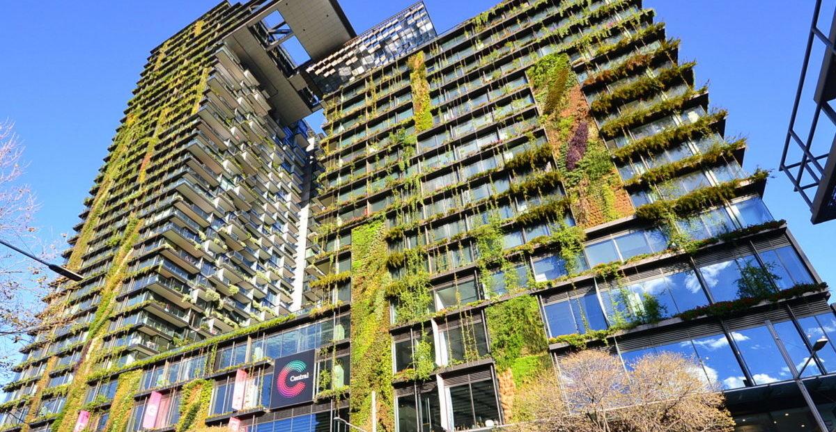 Australijczycy inwestują w zieleń w mieście, bo poprawia samopoczucie