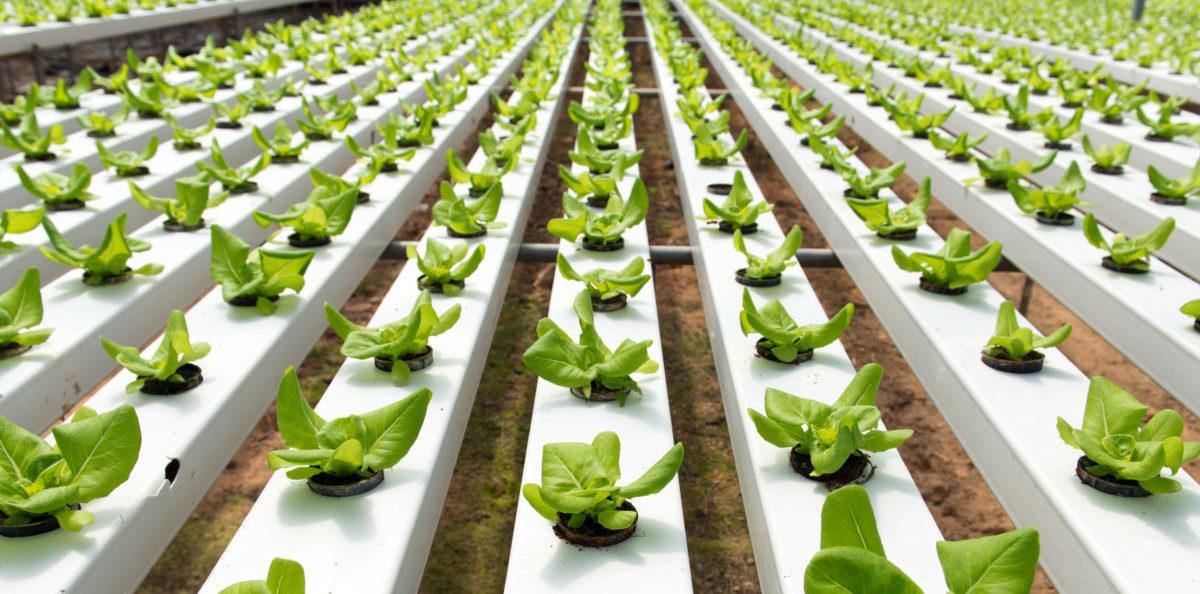 Roboty wywołają kolejną zieloną rewolucję