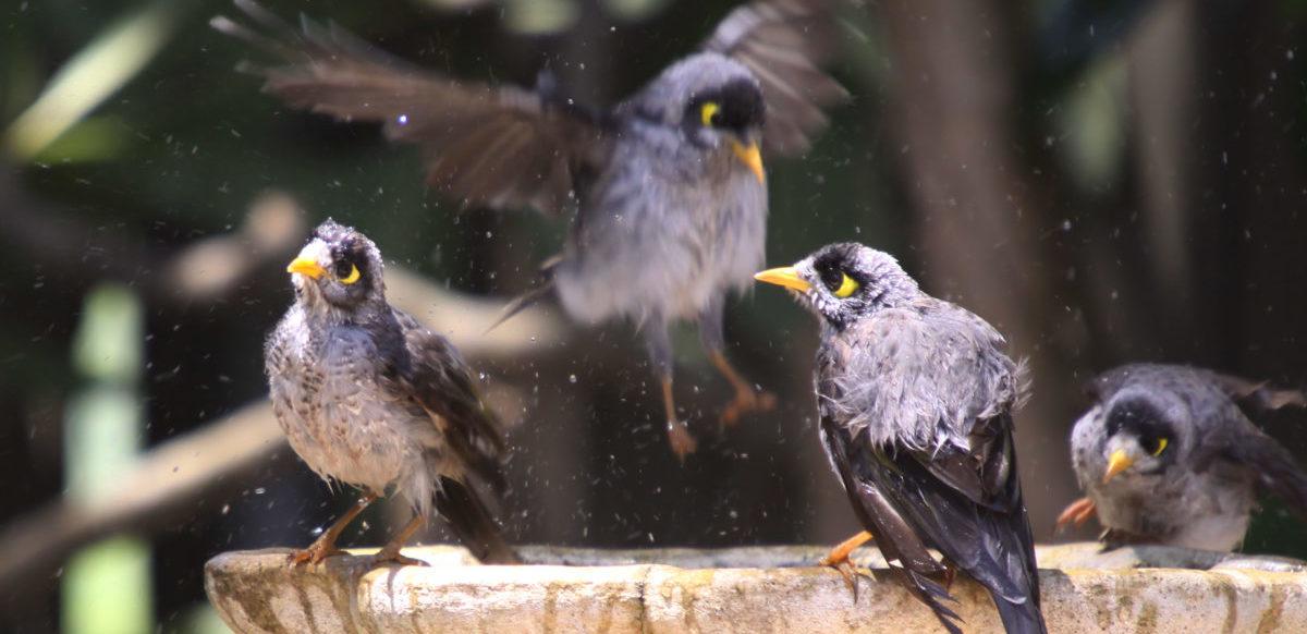 Miasta bardziej przyjazne dla ptaków