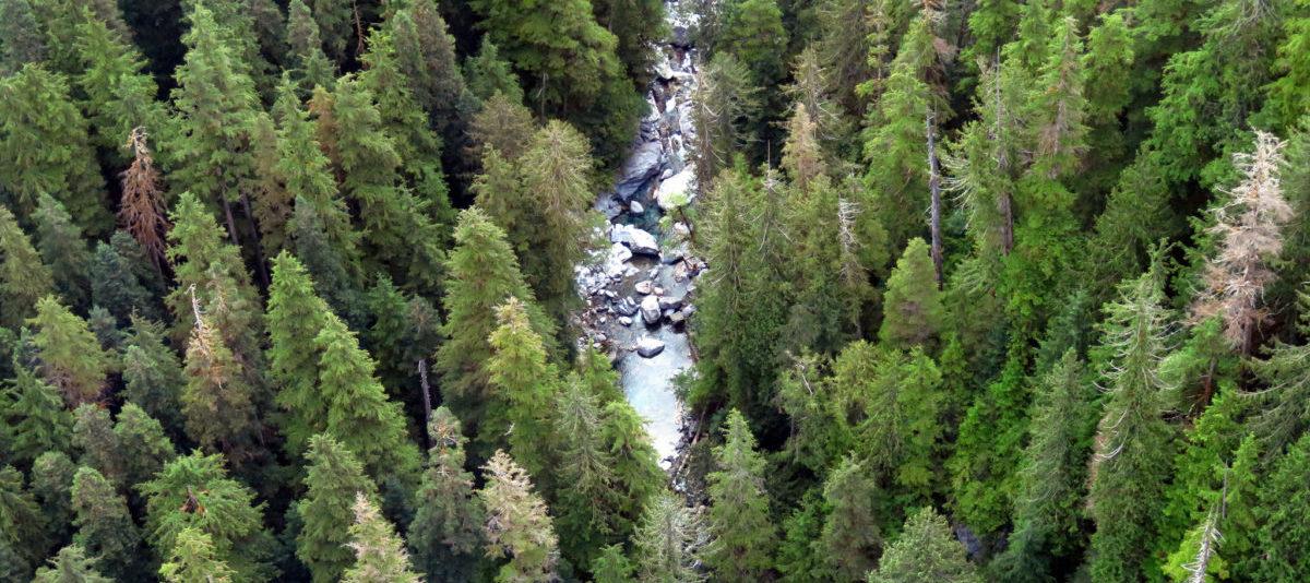 Brytyjczycy stworzą las z 50 milionami nowych drzew
