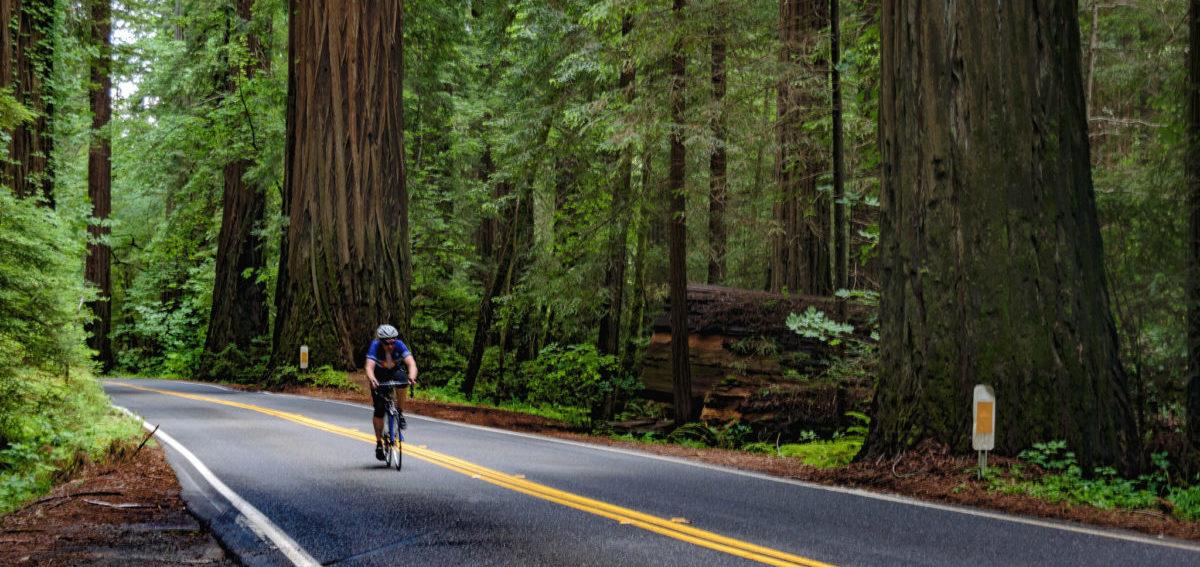 W miastach trzeba zrobić miejsce na lasy