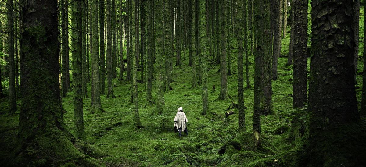 Lasy przeszły do kontrofensywy