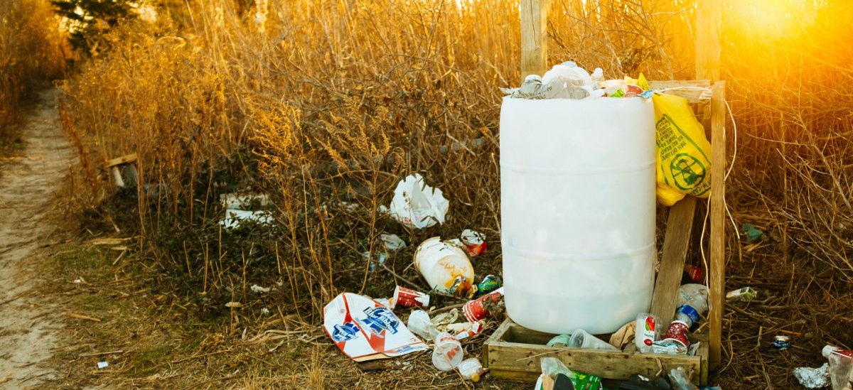 Grzyby zjadają śmieci