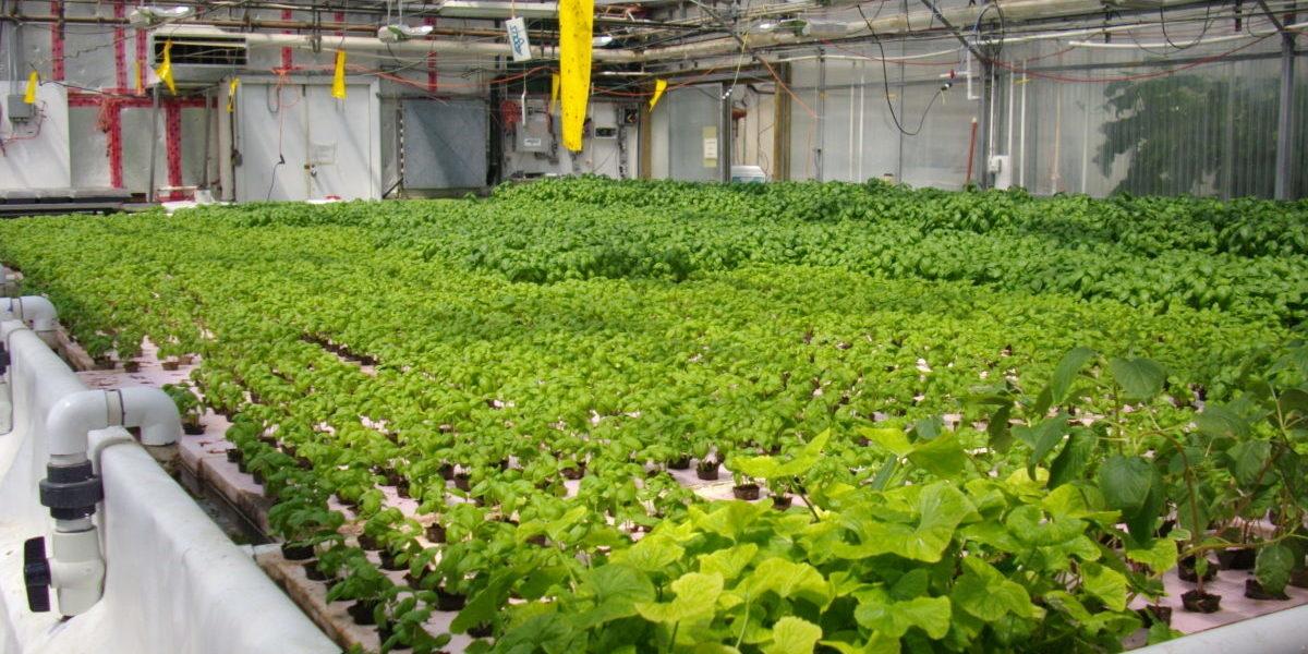 Żeby dostarczyć żywność potrzebującym, społecznicy założyli farmę miejską
