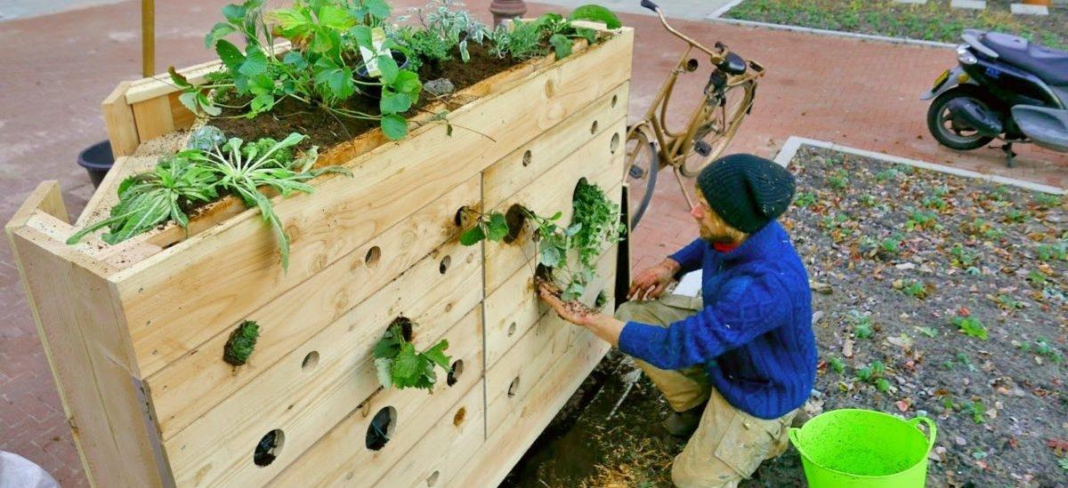 Robaki we własnym domku robią kompost