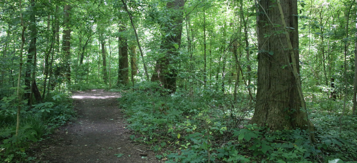 W Memphis ocalono las, który ma ponad 10 tysięcy lat.