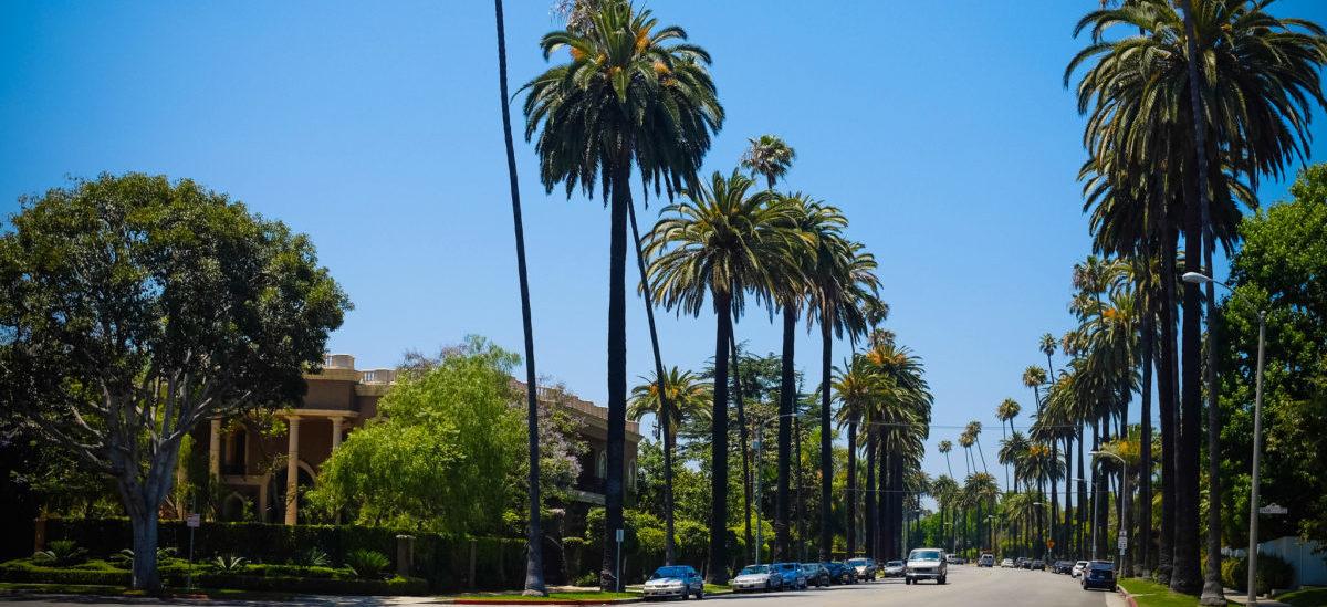 Jak drzewa zmieniają oblicze miasta