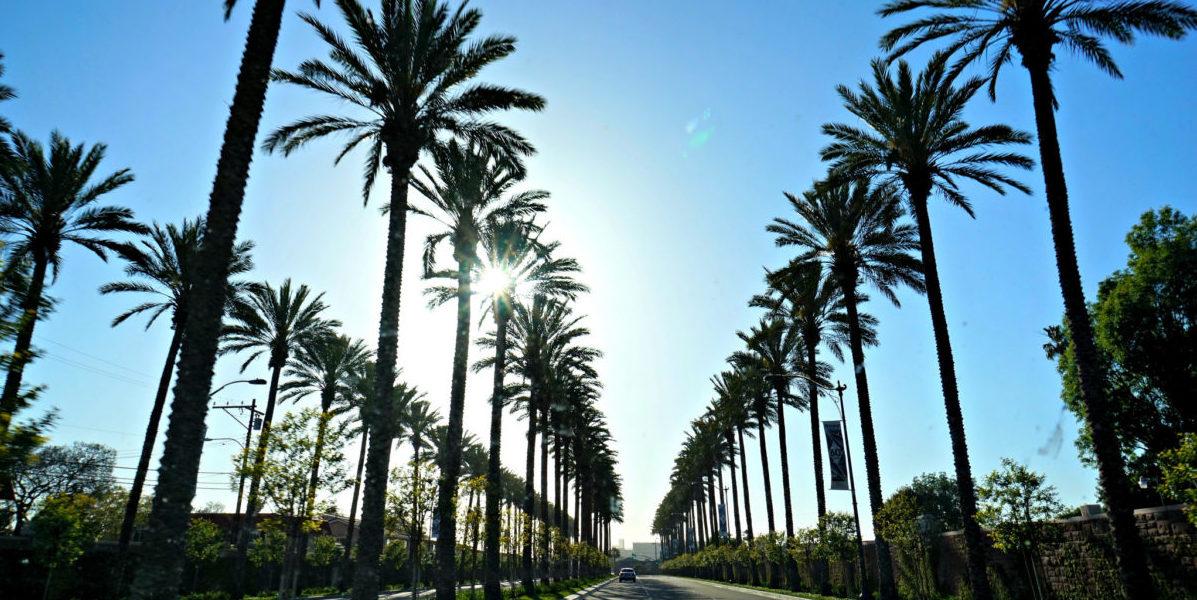 Drzewa mogą całkowicie zmienić oblicze miasta