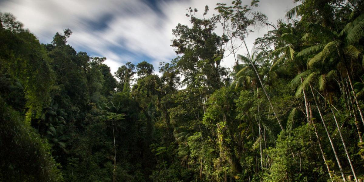 Skokowy wzrost powierzchni lasów obniża temperaturę na Ziemi. Już raz, za sprawą człowieka tak się stało