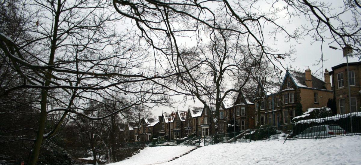 Mieszkańcy Sheffield uratowali 12 tysięcy drzew