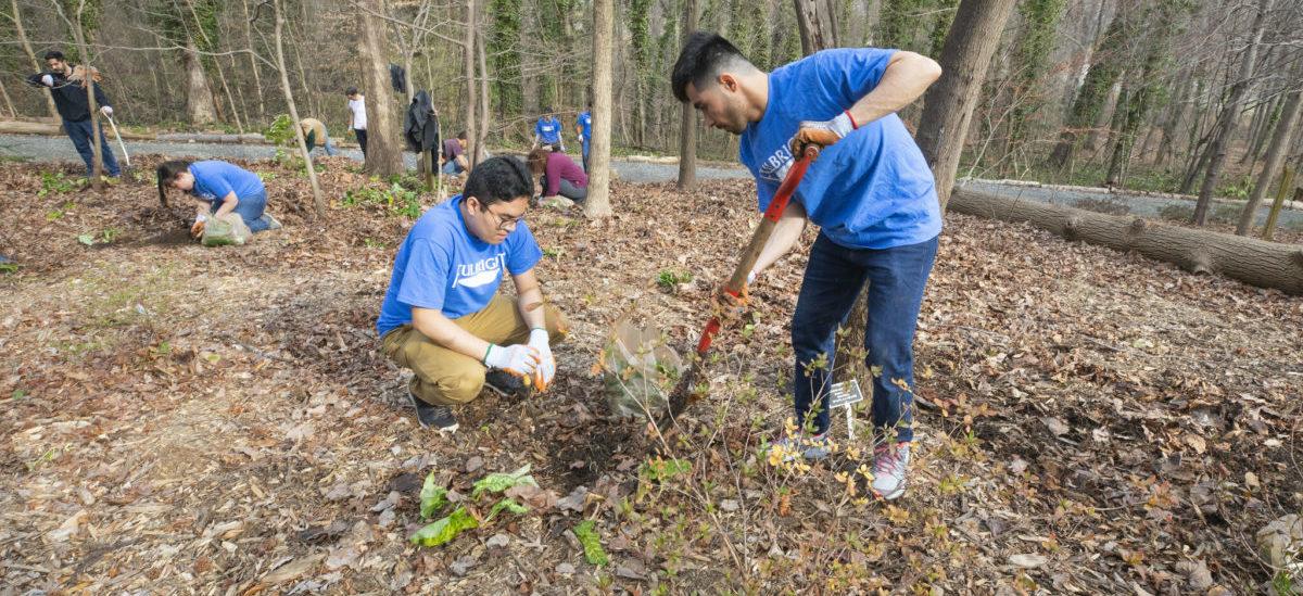 Nowy obowiązek szkolny: sadzenie drzew