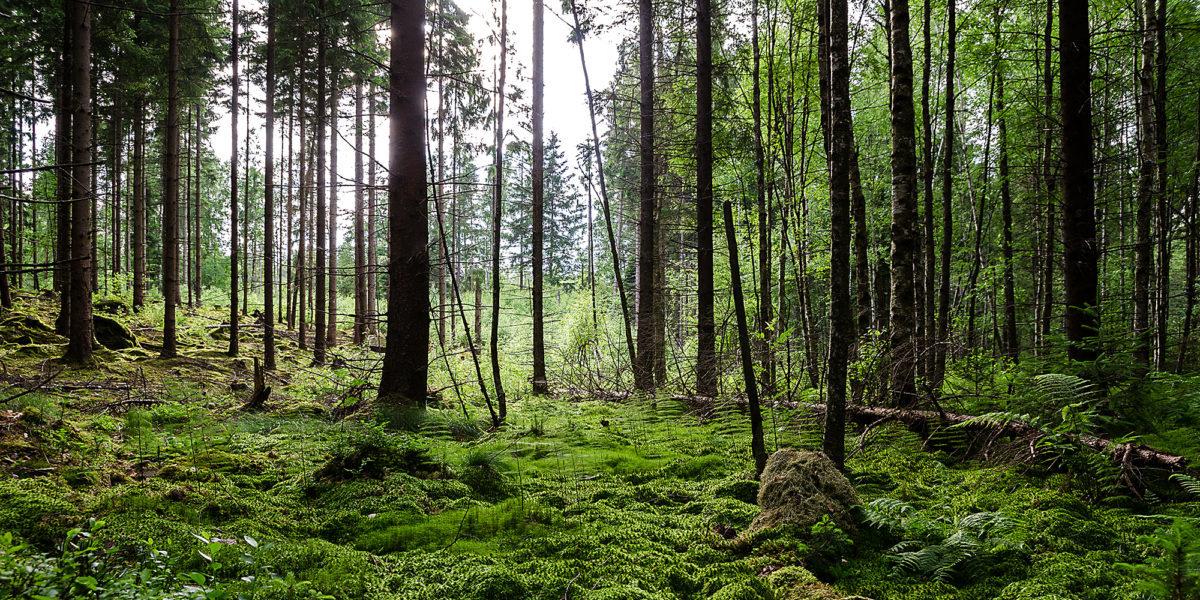 To mit, że powierzchnia lasów wokół nas się zmniejsza