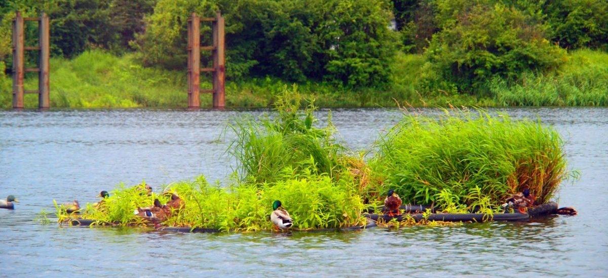 Ogrody pływają po miejskich rzekach