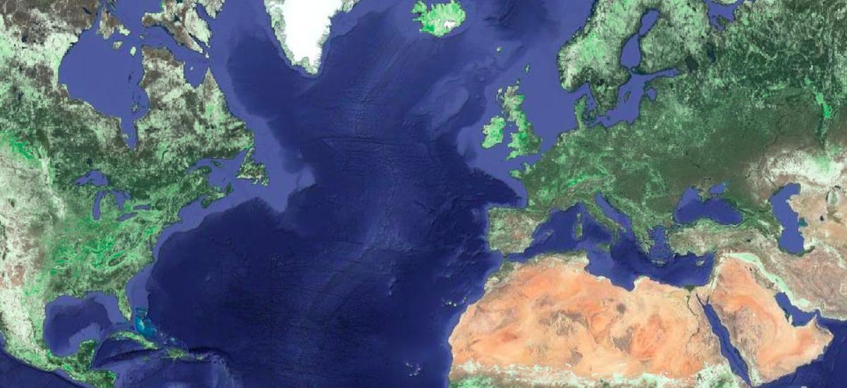 Jest plan wysiania miliarda hektarów lasu