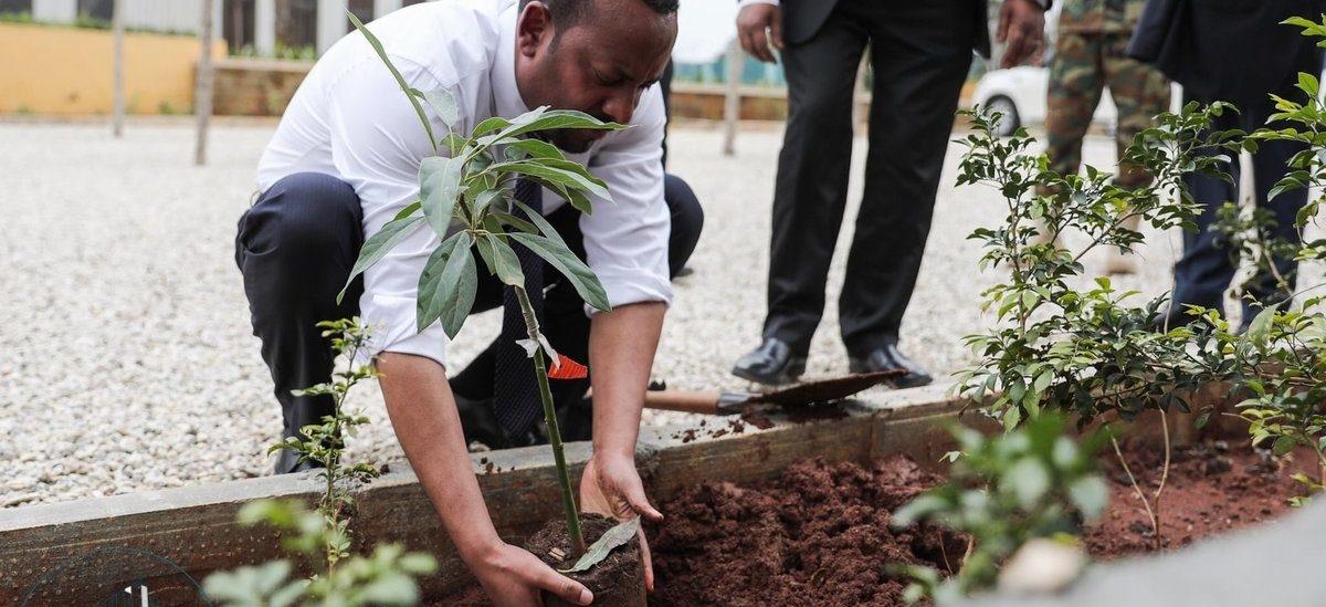 350 mln drzew w jeden dzień