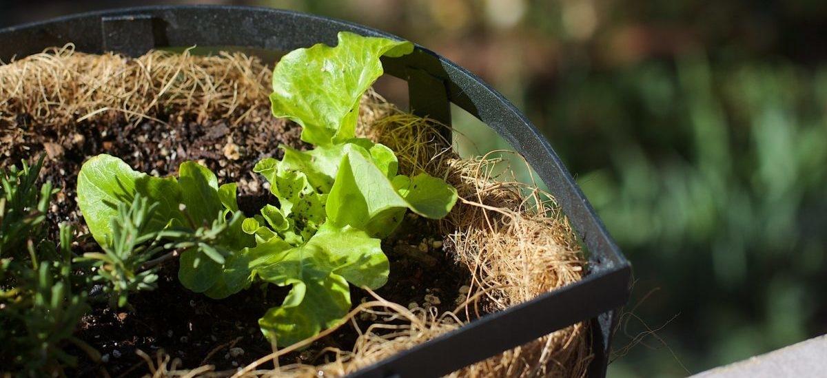 Dział warzywny rośnie w sklepie