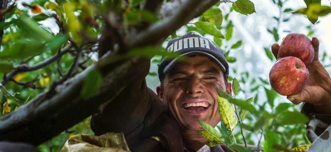 Mieszkańcy sadzą las do zjedzenia